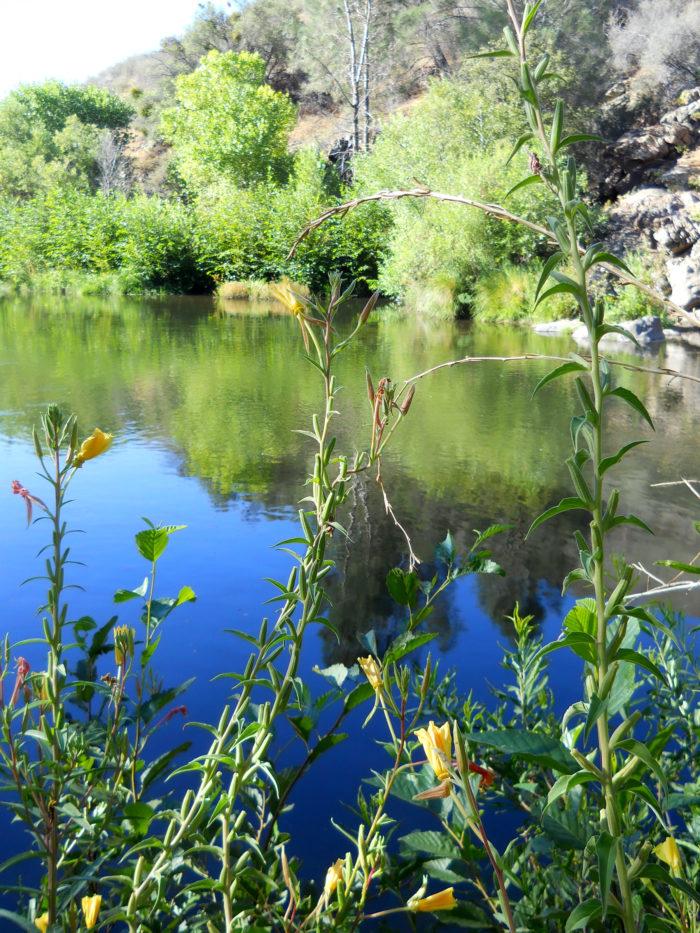 Kern River, CA | Photo: Barbara Hinckley